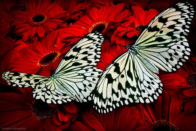 Z Gallerie Butterfly butterfly art - a gall...