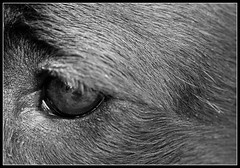 Dogs eye view