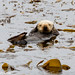 Southern Sea Otter by slice48666