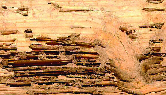 Termite Wood Damage Flickr Photo Sharing