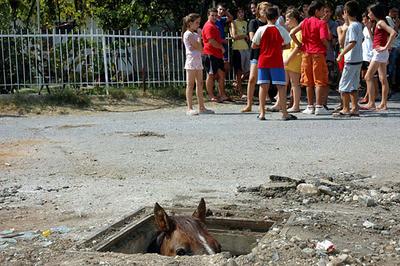 Image result for horse underground