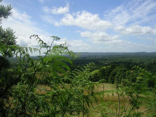 View with Bracken