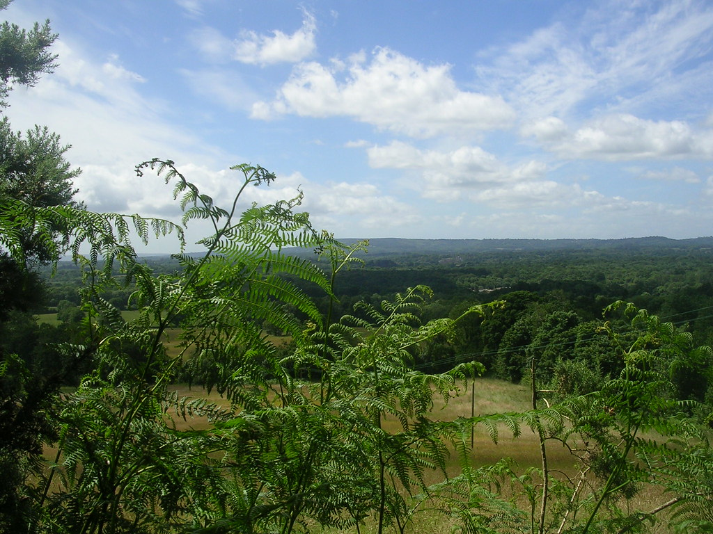 View with Bracken Milford to Godalming