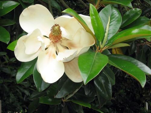 Flowering Plants (Phylum Magnoliophyta) · iNaturalist.org