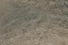 20080713 - Crosby Landing Beach