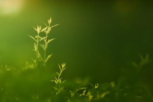 light green leaves fog d50 thailand nikon dof bokeh 85mmf14d ehbd hggt