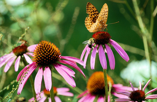 ButterflyBee on Pine Creek Trail
