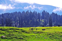 Wonderful Kashmir - Luxury
