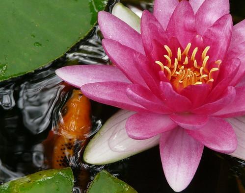 Plantas de jardin cuidado de plantas for Plantas ornamentales y sus cuidados
