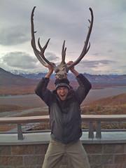 trophy hunting, horn,