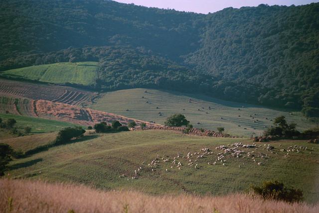 La Terra di Campagnatico - Countryside around Campagnatico (GR)