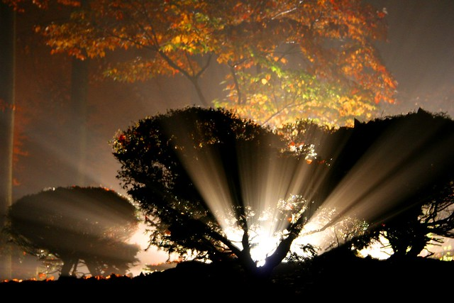 Light Beams: Rays of Color