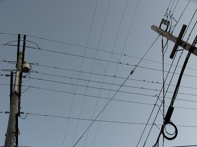 telephone pole wires and birds explore frankfarm s photo flickr photo