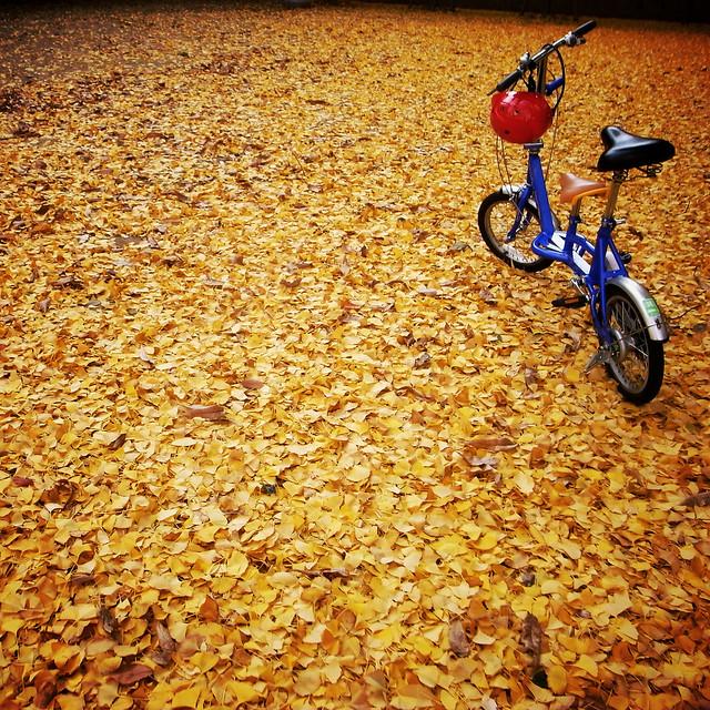 bike on yellow
