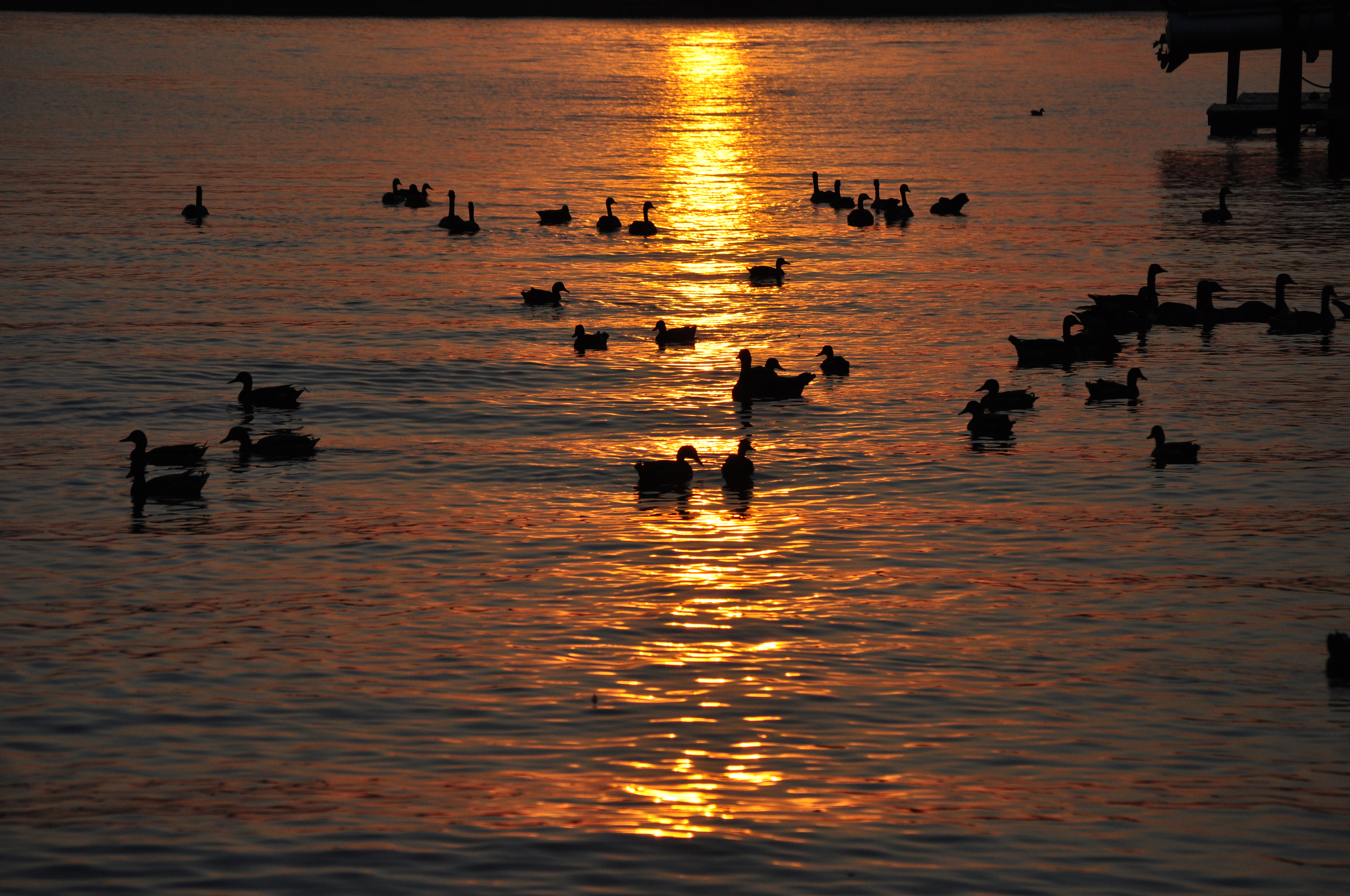 Copperhead Island Lake Wylie Sc