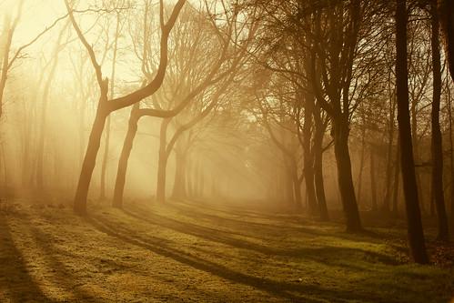 trees mist netherlands fog fairytale bomen nederland heiloo sprookje nijenburg rondeo