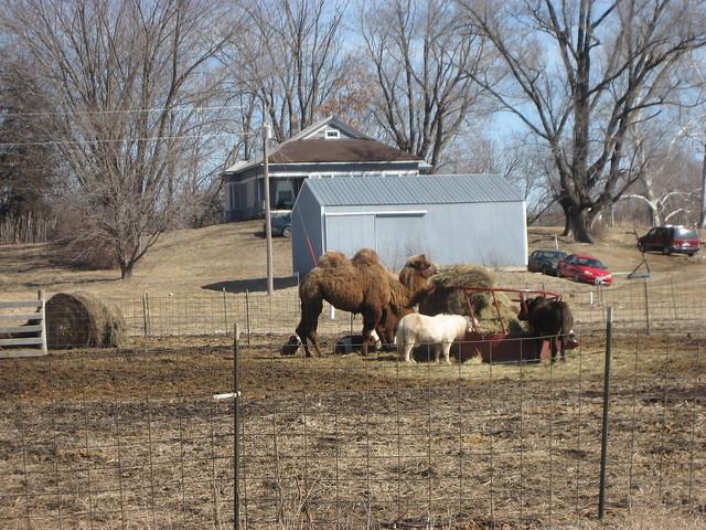 Native Iowan Wildlife