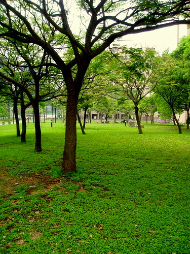 Trees & grass, Spring sign at university campus, Hsin Tsu city, North Taiwan