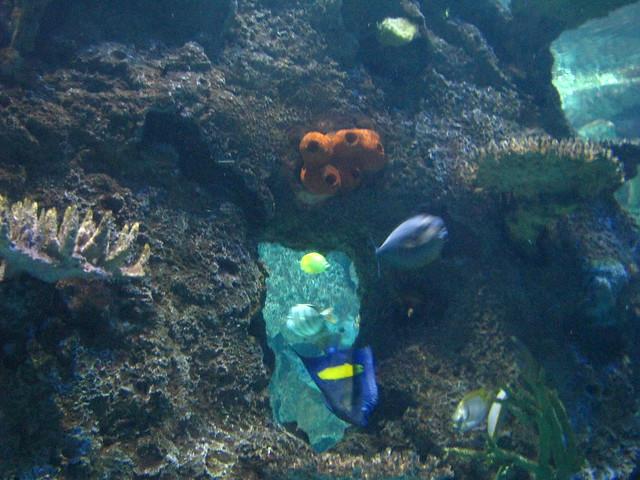 Shark Reef Aquarium At Mandalay Bay Flickr Photo Sharing
