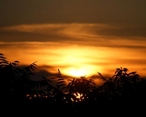 trees sunset sky sun wisconsin photo sundown explore peshtigoriver explored msjudi peshtigowisconsin