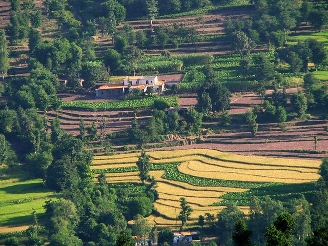Terrace farming flickr photo sharing for Terrace india