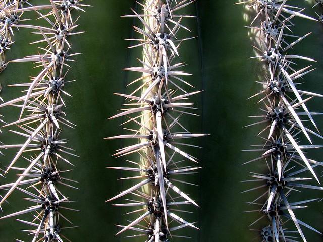 Saguaro Cactus Spines 1 Flickr Photo Sharing