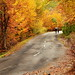 Autumn Road by cuellar