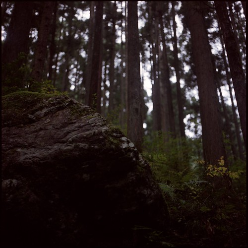 forest of dreams (4) / calling