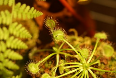 flower(0.0), moss(0.0), carnivorous plant(1.0), leaf(1.0), plant(1.0), macro photography(1.0), flora(1.0), green(1.0),