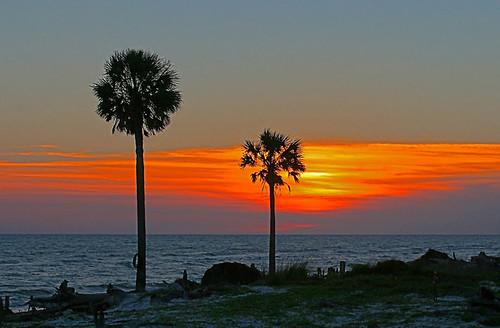 sunset vacation slr beach canon photography florida palmtrees digitalcamera capesanblas alabamageographer stjosephpeninsula copyright2008 floridasforgottencoast almostredneckrivera napgmember timothyheinsephotography