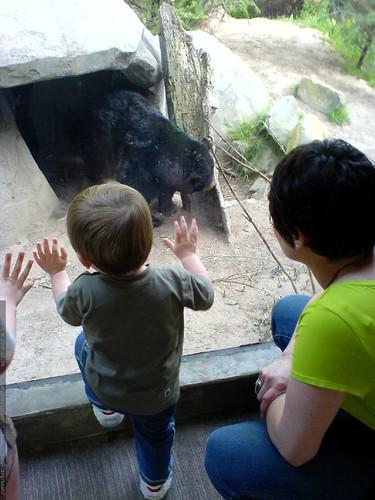 mister bear does some beargazing   DSC01362
