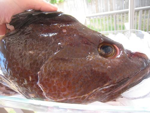 Recipe mama 39 s fish head soup hee tao tung for Fish head recipe