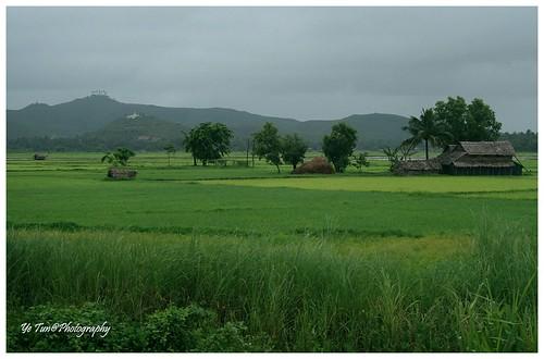 house mountain tree green field rain rural canon season landscape pagoda weed asia wind paddy country hut monsoon myanmar