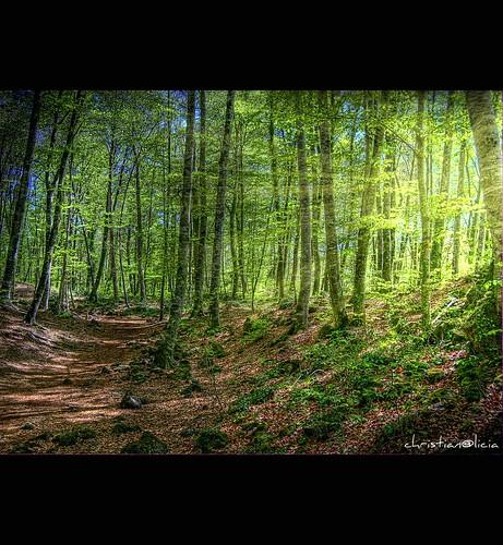 forest landscapes nikon catalonia bosque catalunya hdr hayas bosc olot catalogne faig fagedadenjorda lagarrotxa hayedo flickrsbest impressedbeauty d40x multimegashot thedavincitouch