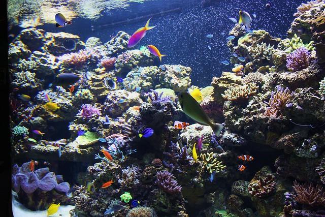 Nmnh ocean hall aquarium flickr photo sharing for Aquarium washington dc