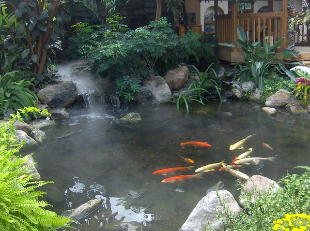 Pond With Koi Waterfall Flickr Photo Sharing