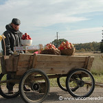 Lithuanian Apple Cart - Siauliai, Lithuania