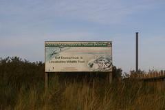 Donna Nook Grey Seal Colony