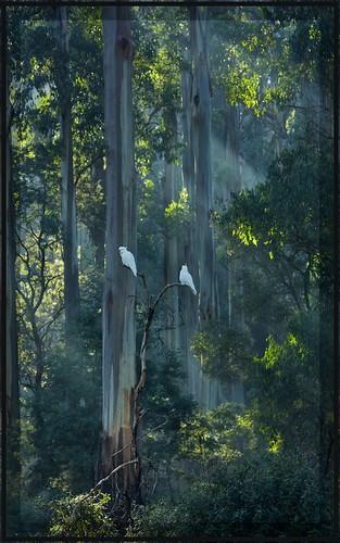trees light forest silence mediation lonley abigfave raretone