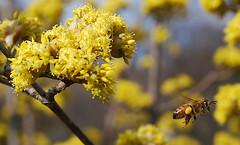 Mmmm pollen