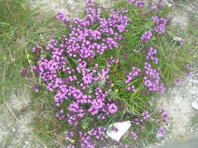 Thyme Lewes to Saltdean