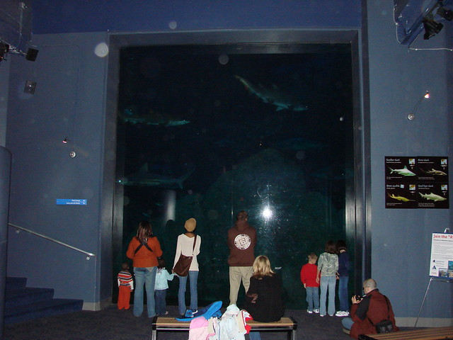 2008 03 16 Camden 020 New Jersey State Aquarium Flickr
