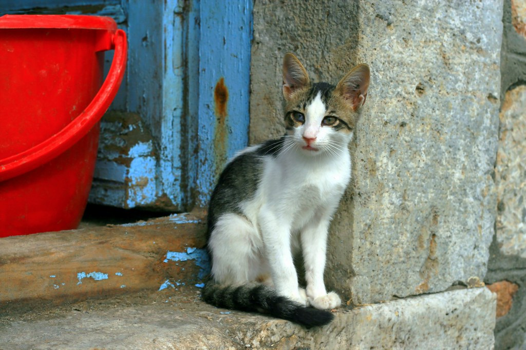 Cat and red pot
