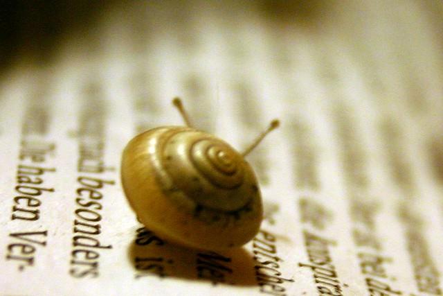 Merry lettuce snails VII