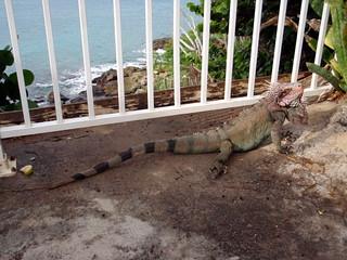 Image de Limetree Beach près de Charlotte Amalie. stthomas sapphirebeach