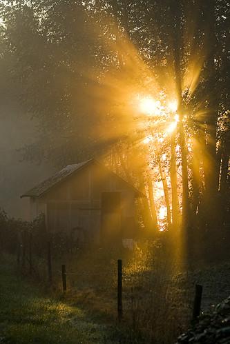 morning sunlight mist fog sunrise dawn britishcolumbia surrey barnstonisland canonef70300mmf456isusm kvdl