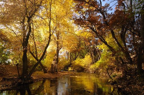 fall colors leaves river utah stream saltlakecity sugarhousepark d300