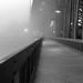 Early morning Steel Bridge by Sardonic G