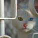 occhi di gatto...EXPLORE...#249