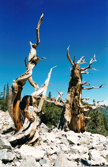 Great Basin National Park, Nevada